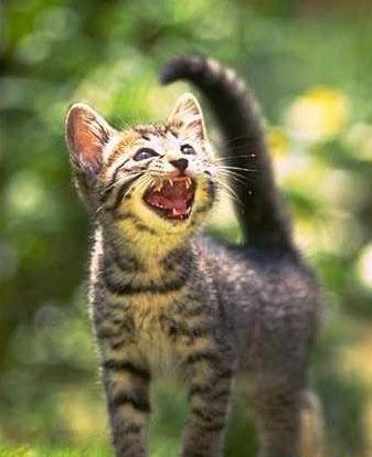 引用  一只猫咪的爱恋故事 - 天地人 - 生灵天地