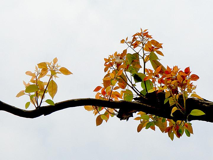 [原创]断肢新芽 - 歪树 - 歪树