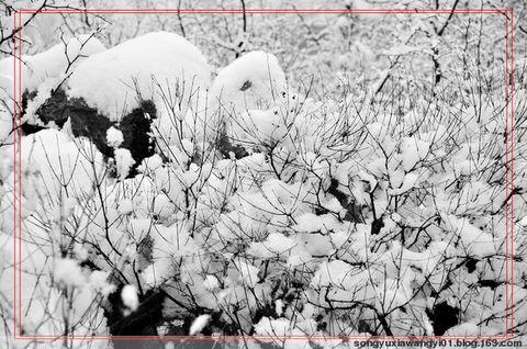 【原创】  好事近《春雪》 - 心音如月 - 心音如月的博客