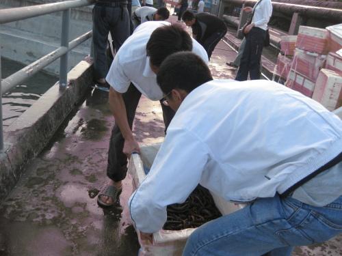 5月7日放生——黄鳝、泥鳅、鳖、塘虱、钞票、生命 - 阿德 - 深圳放生