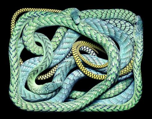 超强!致命美丽的毒蛇绘画艺术 - wzpgll1966 - wzpgll1966的博客