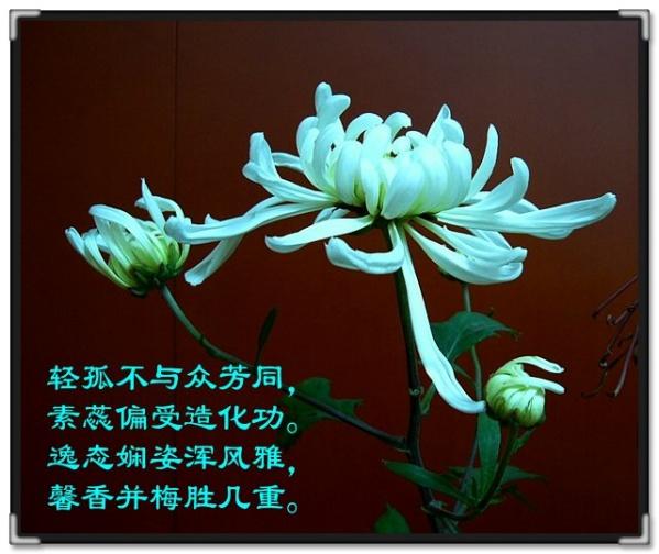 菊韵飘香[音画欣赏] - 空谷幽兰 - 霓裳羽衣
