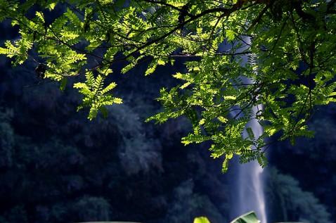雨后的美丽世界(组图) - 無為居士 - 聚美齋