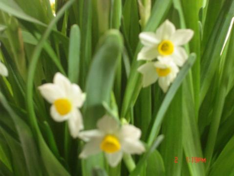 那些盛开在09年的水仙花啊 - 幸福的闪电 - 幸福的闪电