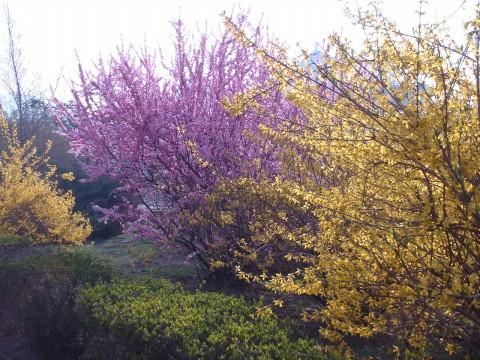 春之心曲 - 小肥子 - 小妹的博客