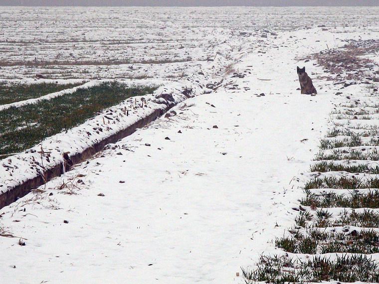 2009年 迟来的雪 - 漂泊   - 漂泊的博客