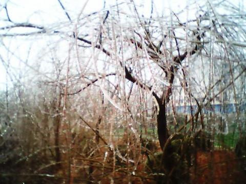 冬天『图话』 - 谈笑桃源 - 谈笑桃源的博客