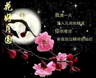 花好月圆 - 清清百合 - qqbh温馨小屋