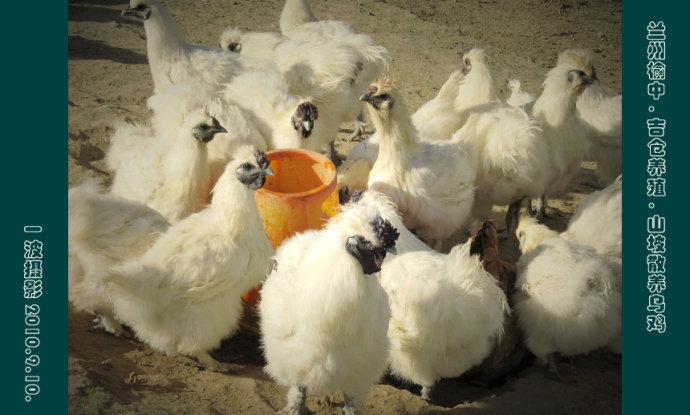 四个娃的妈和吉仓养殖合作社_行走在西部的草原_新浪博客 - 行走在西部的草原 - 行走在西部的草原