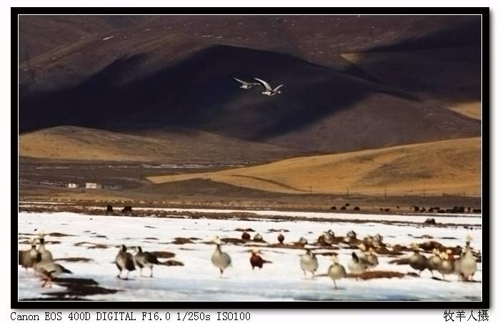 【摄影原创】隆宝写生之二 - 玉树牧羊人 - 玉树牧羊人的博客