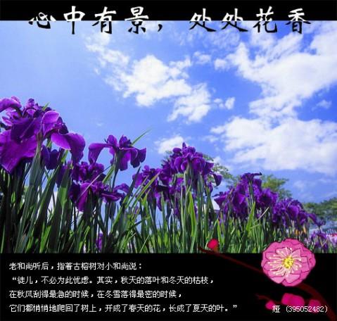 精美圖文欣賞83  - 唐老鴨(kenltx) - 唐老鴨(kenltx)的博客