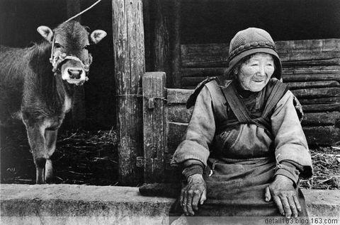 (原创 诗歌)中国牛 - 新鞋老路 - 新鞋老路的博客