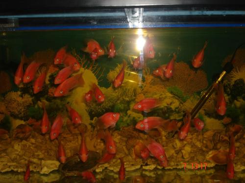 热带鱼、金龙、银龙、招财、红箭、七彩神仙等不同品种的鱼,
