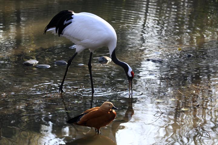 (原创摄影)水鸟 - 刘炜大老虎 - liuwei77997的博客