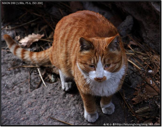 猫 - 南河 - 南河小居
