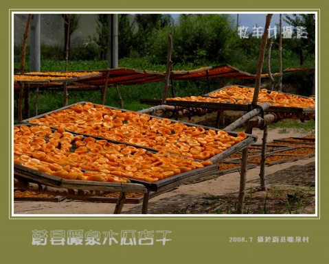 (原创纪实摄影)甜甜的木瓜杏儿 - 牧羊女 - 牧羊女的影棚
