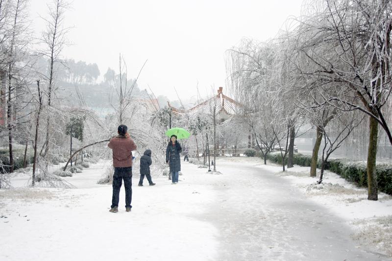[原创]雪中人—— 冰灾记忆之十三 - 歪树 - 歪树