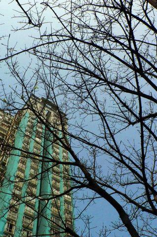 春天的落叶-2月20/21日的家门口 - 星子 - 月光下放声歌唱