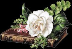 岁月的脚步 - 春暖花会开 - 春暖花会开的BLOG