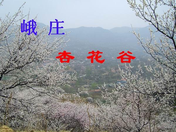 峨庄 杏花谷 - 坏老头 - hlt50的博客