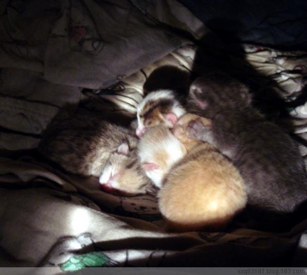 [原创]加国小猫成长记 - 巧儿 - 欢迎光临巧儿的快乐家园