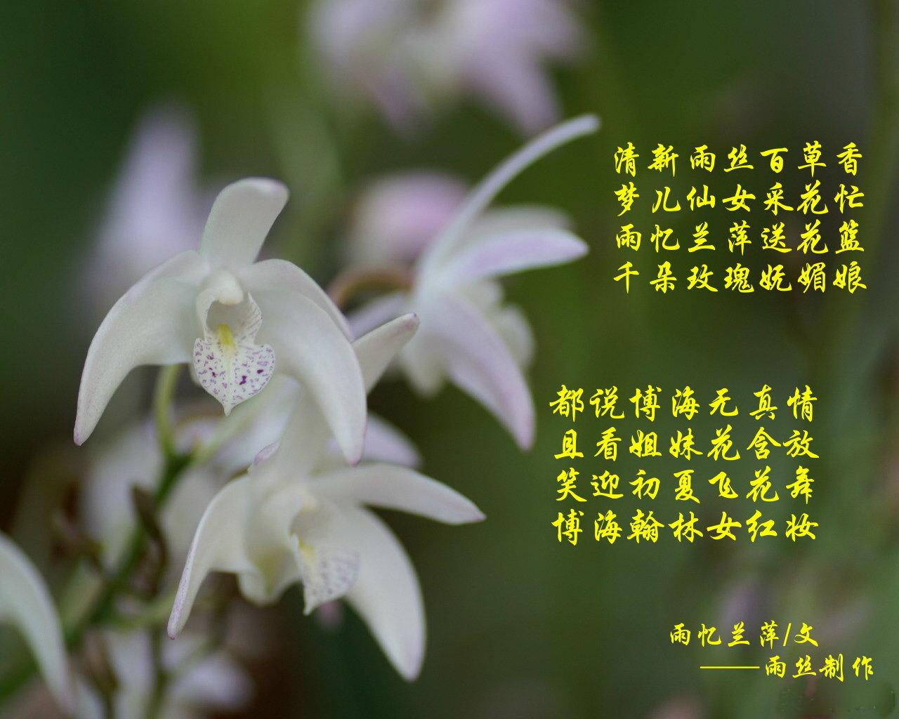 《雨忆兰萍诗集》——博海翰林女红妆 - 雨忆兰萍 - 网易雨忆兰萍的博客