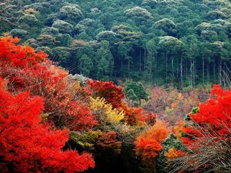 秋天因红叶而瑰丽