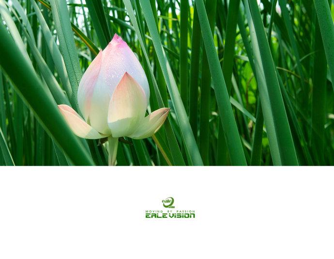 荷韵-河边小品 - ealemailbox - ealemailbox的博客