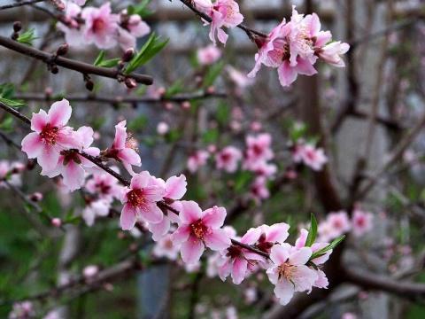 大棚里的春天 - 清扬 - 花果飘香