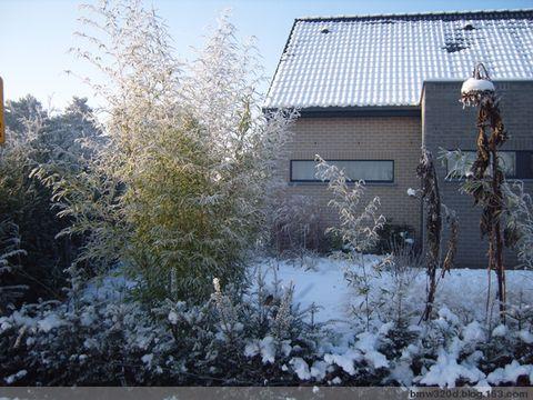2009年1月11日 - 小明 - 小明的花园