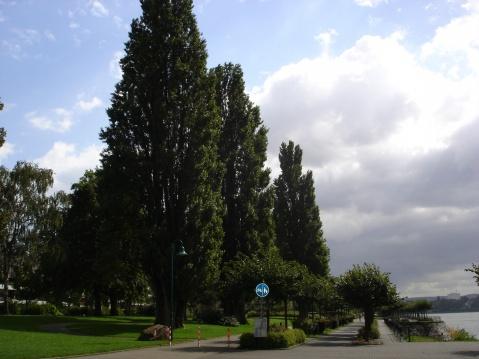 意大利黑杨树 - pfspfs666.popo - 反三的博客