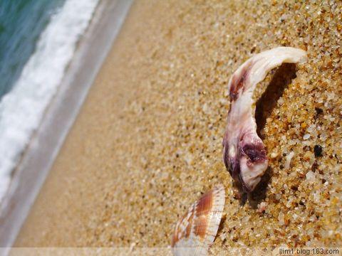去年.....海边.... - MONKEY CAT - 死去的靈魂與活著的軀殼