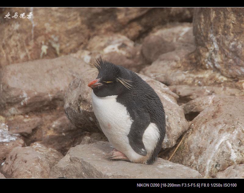 啊,南极(六) - 西樱 - 走马观景