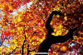 金秋----美妙的季节(诗配图)