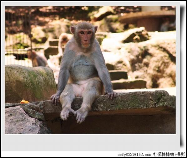 【原创摄影】_猴园游记 - 柠檬棒棒糖 - 柠檬棒棒糖的田园