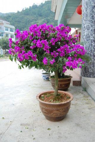 苗  歌  选  唱 - 蝴蝶人 - 蝴蝶人黔东南苗族文化博客