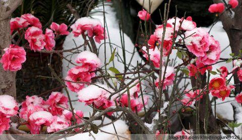 (引用)视觉春天 - 心手相连 - 温馨家园