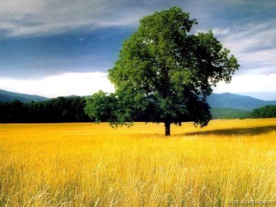 [原]独自呓语------来世,做一棵树 - 飘渺的风笛 - 飘渺的风笛