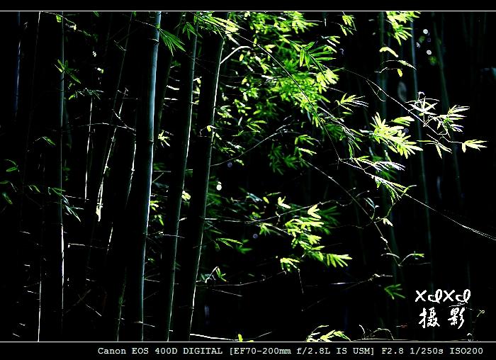 【我学摄影】 森林公园拍蝴蝶 - xixi - 老孟(xixi) 旅游摄影原创作品