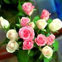 【素材】情人节的玫瑰花 - 秋夢園主☆秋 - ☆秋夢園☆