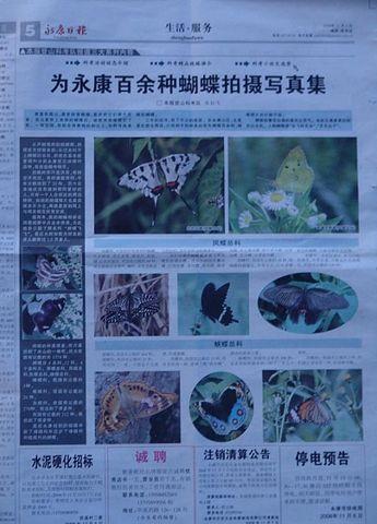 蝴蝶照片蝴蝶先生 - 飞飞 - 蝴蝶飞飞