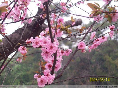 2008年3月11日浅谈红颜知己 - jsh46漓江小子 - 漓江小子的个人主页