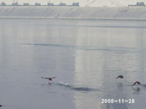 2008年1128陕西省陕南山区小城市安康照片 - 土妹 - jhm1103的博客