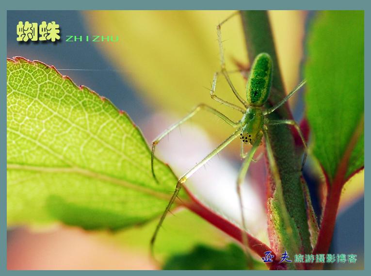 (原摄)八眼蜘蛛 - 高山长风 - 亚夫旅游摄影博客