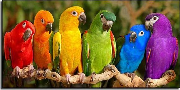 超可爱!那些风情万种的鸟儿