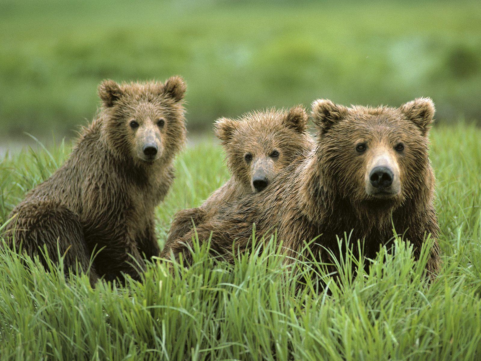 视觉大餐-动物世界 - 沉默是金 -    沉默是金博客
