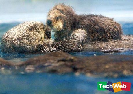 动物们最令人动容的纯真瞬间!【...-聚美轩 - 空非空大王 - 81889981281.love 的博客