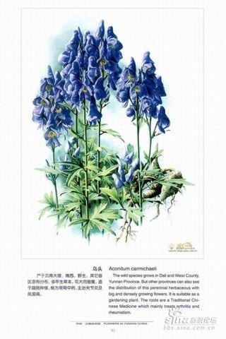 十大剧毒花卉,就在你身边,遇到它们要小心!! - 天高云淡 - 天高云淡
