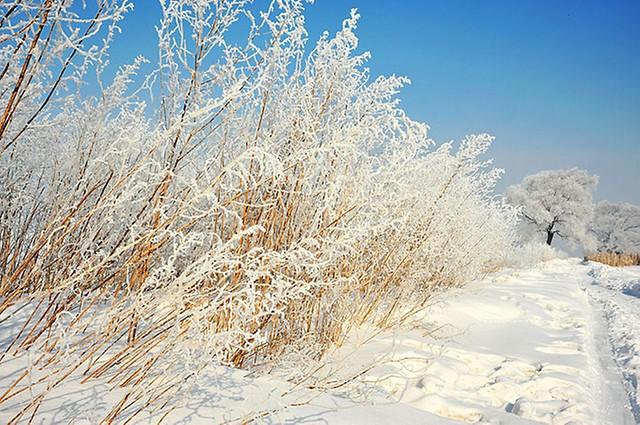 【收藏】太漂亮了!吉林雾凇岛为雾凇之美而生 - 鸟语花香 - 鸟语花香