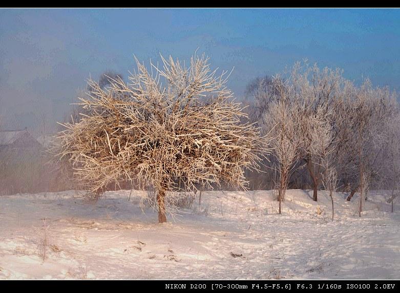 冬日里的温柔___雾凇(一) - 西樱 - 走马观景